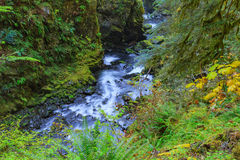 Sol Duc waterfall in Rain Forest Royalty Free Stock Photos