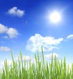 sol e grama do céu com gotas da água Imagem de Stock