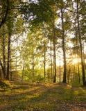 Sol en bosque del otoño Fotos de archivo libres de regalías