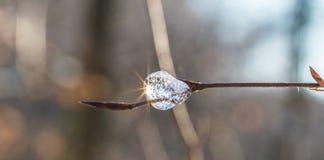 Sol en el hielo en una rama Fotografía de archivo libre de regalías