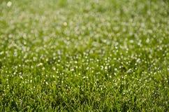 Sol en hierba mojada Imagen de archivo