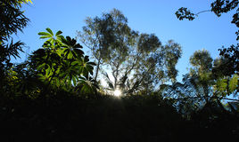 Sol en la selva Fotografía de archivo libre de regalías