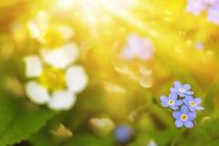 Sol en las flores de pascua imagen de archivo libre de regalías