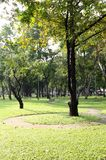 Sol en parque imagen de archivo