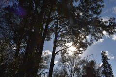 Sol entre arboles Royalty Free Stock Photo