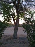 Sol escondendo da vida da árvore solitária imagem de stock royalty free