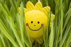 Sol feliz Imagens de Stock Royalty Free