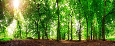 sol för 360 skog Arkivfoton