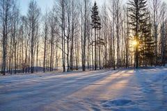 Sol- frostig morgon Arkivfoto