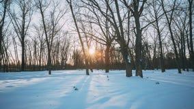 Sol hermosa del sol de la puesta del sol en el invierno soleado Forest Park nevoso Luz del sol a través del bosque en paisaje del almacen de metraje de vídeo