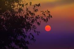 Sol hermoso con el cielo violeta fotos de archivo