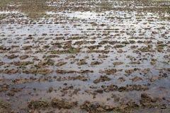 Sol humide de boue pour la culture de riz, agriculture humide de complots au sol se préparant à cultiver la culture de riz, argil image stock