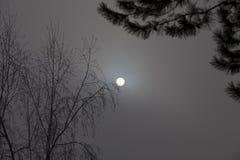 Sol i en ogenomskinlighet på en vinterdag fotografering för bildbyråer