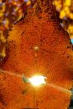 Sol i ett blad fotografering för bildbyråer
