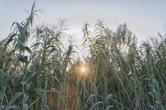Sol i gräset Fotografering för Bildbyråer