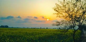Sol i moln i solnedgång med det härliga trädet arkivfoto