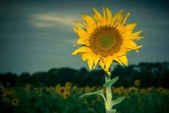 Sol i skymning Royaltyfria Foton