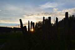 Sol i staketet Royaltyfri Bild