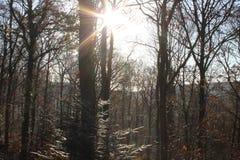 Sol i vinter arkivfoton