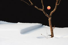 Sol i vintern Arkivfoton