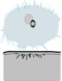sol- illustration för förmörkelse för bakgrundsblackdesign Arkivfoton