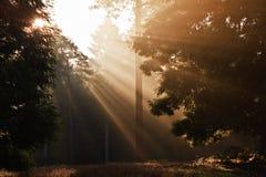 Sol inspirado do alvorecer estourado com o outono das árvores Imagem de Stock Royalty Free
