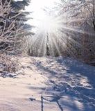 Sol- julmorgon Arkivbild