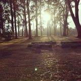 Sol levante australiano Fotografie Stock