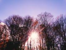 Sol Lite Royaltyfri Foto
