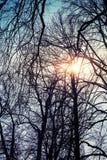 Sol med linssignalljuset i kala trädkonturer över blå himmel Arkivfoto