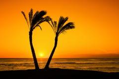Sol mellan palmträd Arkivbilder