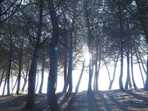 Sol mellan träden Royaltyfria Bilder