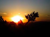 Sol mellan trädet Arkivfoto