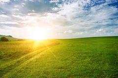 Sol nära horisonten och det gröna fältet Royaltyfria Bilder