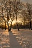 Sol naciente que brilla a través de un árbol de abedul en parque del invierno Fotos de archivo