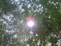 Sol och blad Arkivfoto