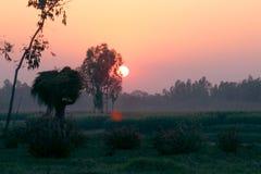 Sol och bonde med risfältskyldighet Arkivfoton