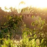 Sol och gräs royaltyfria bilder