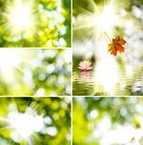 Sol och härlig blomma på en grön bakgrund Fotografering för Bildbyråer
