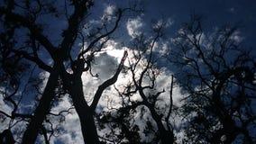Sol och moln bak träd Royaltyfri Fotografi