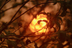 Sol och rök Royaltyfri Foto