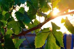 Sol och sidor fotografering för bildbyråer