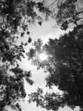 Sol och träd Royaltyfri Fotografi