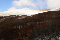 Sol och träden Royaltyfri Foto
