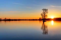 Sol och träd i sjön Royaltyfri Foto