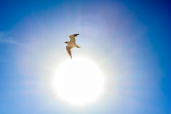 Sol och vitfågel i himlen Arkivbild