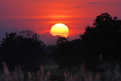 Sol ovanför skogen Arkivbilder