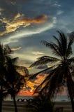 Sol på solnedgången till och med palmträd royaltyfri fotografi