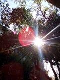Sol på trädet arkivfoto
