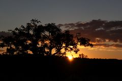 Sol poniente detrás del árbol grande Foto de archivo libre de regalías